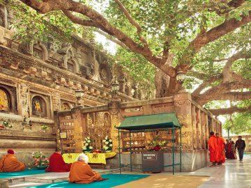 bodh-gaya-bodhi-tree